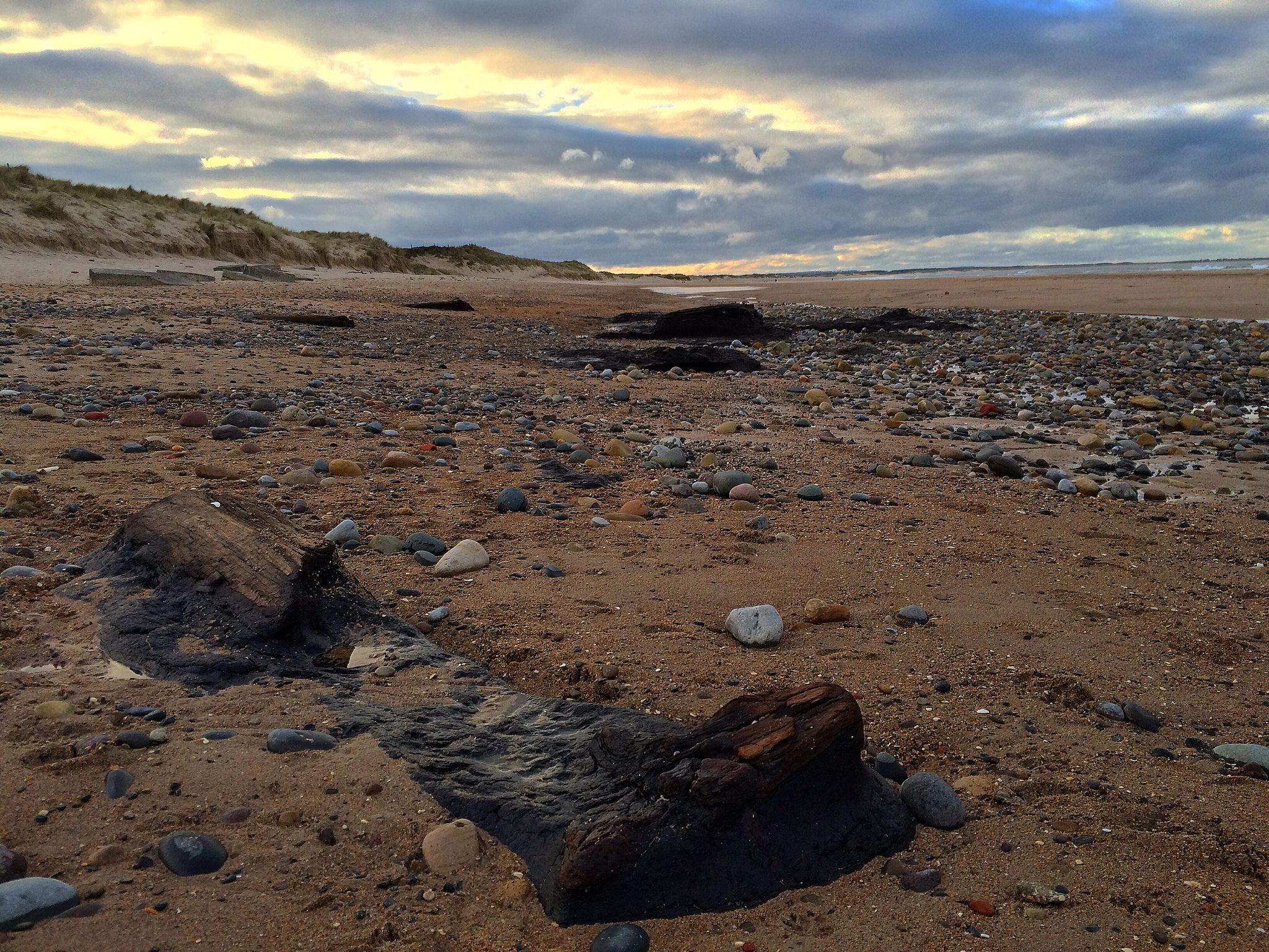 Prehistoric Submerged Forest Northumberland